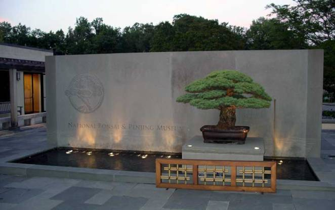 This 390-Year-Old white pine tree survived the bombing of Hiroshima. It was donated to the U.S. Arboretum bonsai collection in Washington, D.C. by Yamaki in 1976.  Read more: http://www.smithsonianmag.com/history/390-year-old-tree-survived-bombing-hiroshima-180956157/#5HDRLezQAtQdMth1.99
